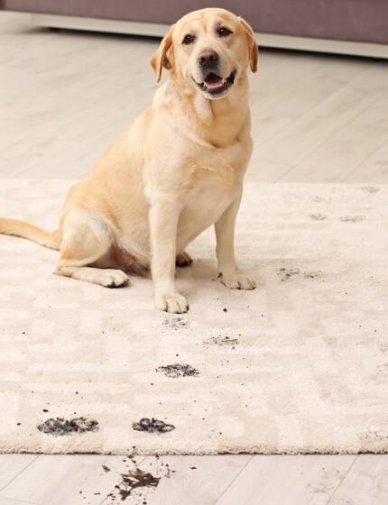 Area Rug Care & Maintenance | Carpet Mart, INC